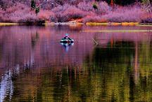 California / by Carolyn Carr