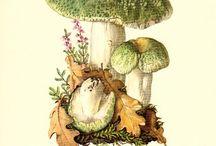 gombák / funghi