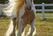 elisn / koně