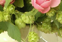 Pink and Green / by Wendy Tressler Albright
