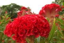 Gardening / by Autumn Emery