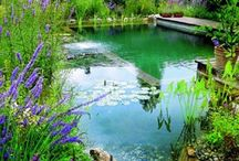 eco swimming ponds / are characterised by having pool edges merge with the surroundings. Requiring no chlorine or other toxic chemicals, the carefully planned planting of a special regeneration zone ensures clean and pure water. The regeneration zone, separated from the swimming area by a dividing wall, is where aquatic plants not only oxygenate the water but along with microorganisms, act as living filters and organic cleansers, naturally and continually filtering the water removing impurities and excess nutrients. / by Marina Paäth