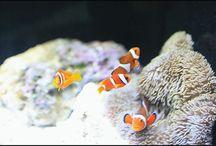 """先日えのすいへ行った時の写真が勿体ないので。 写真を撮るには向いていない水族館ですけど、楽しいですね。 at the """"Enosui"""" aquarium #aquarium #tropicalfish #enosui #shonan #enoshima #えのすい #新江ノ島水族館 #湘南 #江ノ島写真"""