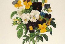 Botany art