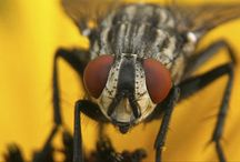 Flies Control / Flies are common pests in the home and yard, but they do pose a health risk. A single house fly can carry over one million bacteria on its body.