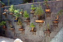 Árboles bonsai