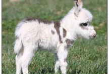 CUTIE, CUTIE LITTLE DONKEYS.