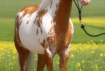 Lovely Horse's