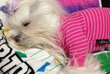 chappy & mami & carl / My dog  我が家の愛犬まみとチャッピーとカール