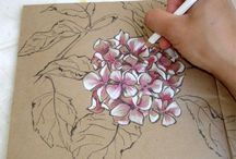 Karen Cumming / Floral drawings