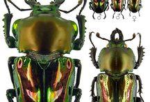 Szépséges rovarok - Bug, Beetle / Bogarak főleg...