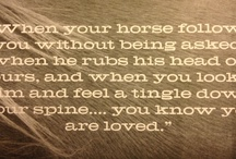 Focuses- Natural Horsemanship