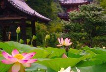 Zen / Japanese gardens
