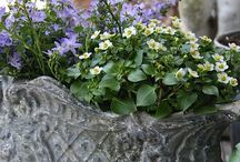 vasi jardiniere