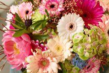 Gerberazeit ist Sommerzeit / Die Gerbera ist eine sehr vielseitige Blume, die es in großem Farb- und Formenspektrum gibt. Fachverband Deutscher Floristen e.V./FDF und Blumenbüro haben eine blumige Kollektion entwickelt, die Gerbera-Blüten in stimmungsvollen Atmosphären zeigen.