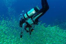 Croisière plongée aux Seychelles / Les Seychelles, paradis des plongeurs.