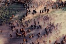 Herds of Horses