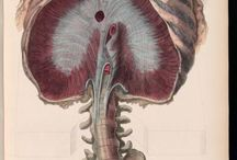 Il corpo umano / Illustrazioni