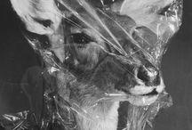 Taxidermy / by Mary Anspach