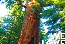 We Love Trees / Alla scoperta degli alberi più belli del mondo