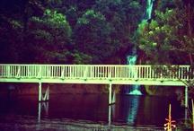 Centennial Gardens- Napier
