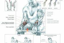 Muscle anatomy - Wrist