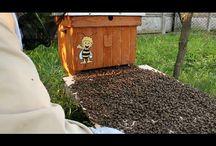 Pszczelarstwo - Pasieka Bzykanko / Z lekkim humorem pokazuję moje zmagania z pszczołami :)