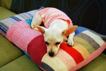 DIY Doggie / Cricket is my little Chihuahua rescue.  She grew up in a puppy mill and then became a puppy mill mom.  Somehow she survived 2 years of shelters.  I know she won't care if I make her stuff that she would like, but I care.  / by Heather McCurdy