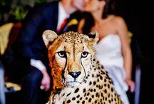 Awkward Wedding / Awkward, ugly, or tacky wedding ideas. And also awkwardly posed dress models. / by Christina Everling