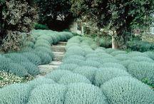 PlantesInsolites