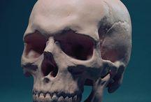 anatomia & pozy ludzkie