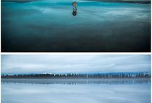 Szibériai Husky