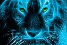 Tigres Azuis