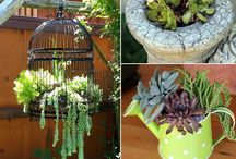 Succulents / Succulents and ways to display them.