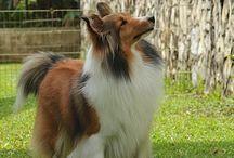 My Puppy Dream