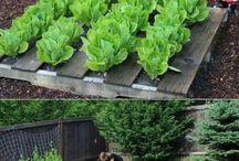 Creative Gardens / Ideas for Gardens