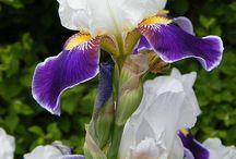 Flower Petals / Flower