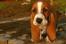 #puppy's / Op dit bord pin ik allemaal afbeeldingen van puppy's