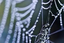 Web / by Vesna Kraus
