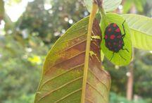 Natureza e insetos