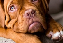 Doggies / dog breeds that I like