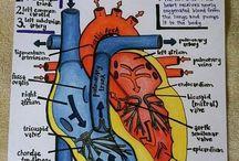 Education anatomy