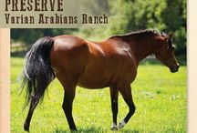 Varian Campaign / Our campaign to preserve Varian Arabians Ranch.  Read more here: https://www.rangelandtrust.org/protect-varian-arabians-ranch/