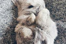 OZZIE/rabbits