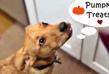 Doggie Treats / by Rita Maria