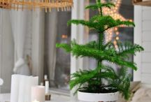 Trendiga gröna växter
