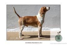 Royal Agricultural College Beagles Season 2015-16