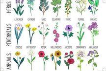 Gardening / by Susanne Mackenzie
