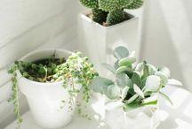 Zen / Cactus. Succulent. Plants