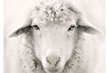 * Sheep sheep Sheep * / by Ebru NAMLI ( aynikki ヅ )